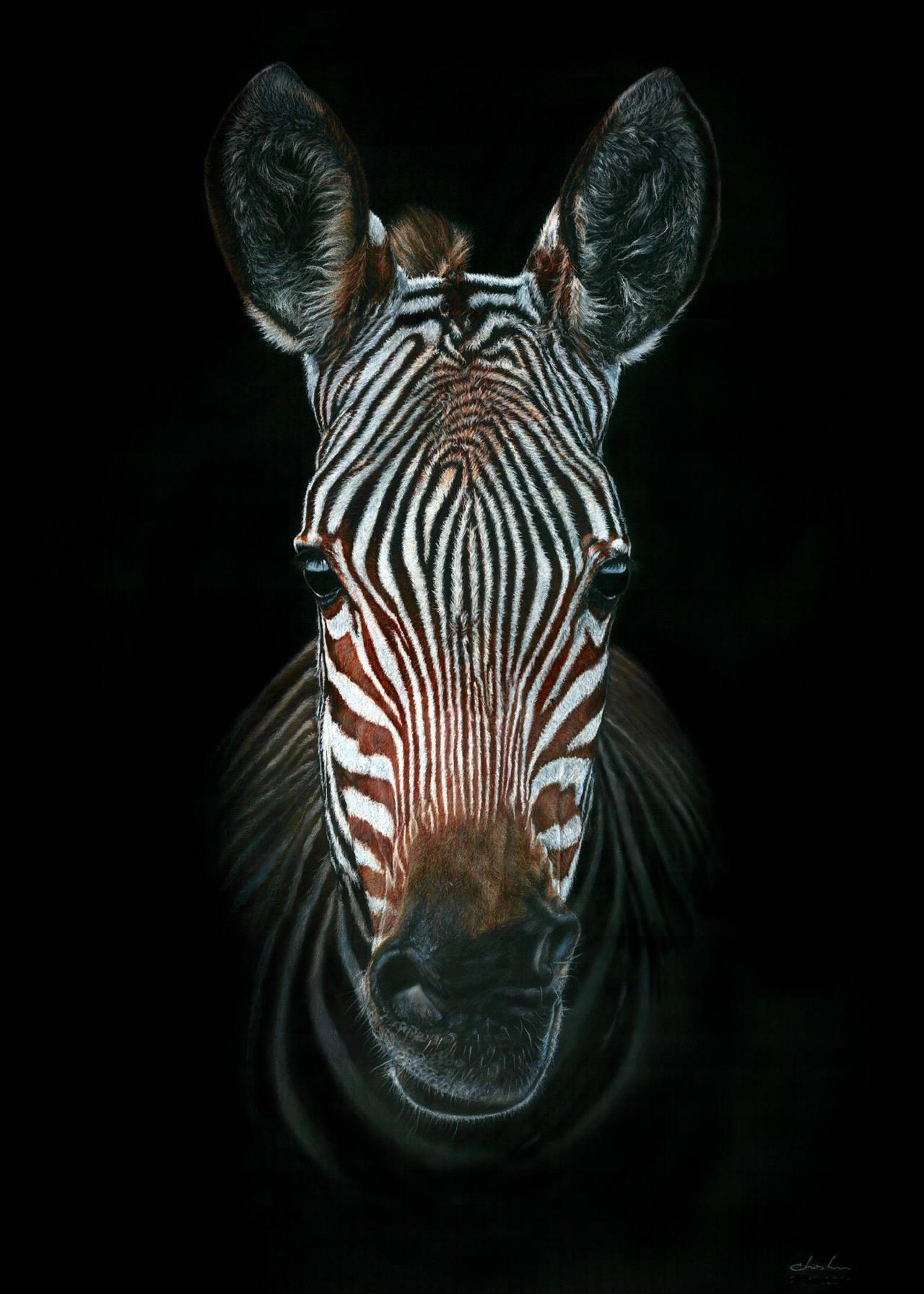 Zebra Portrait by GiovanniChis