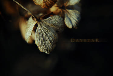 Warming up by Daystar-Art
