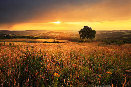Golden fields by MaximeCourty