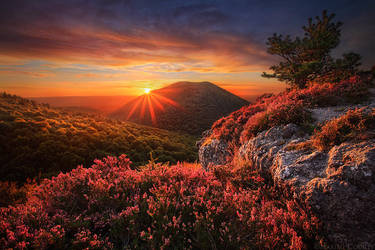 The Unforgettable Wilderness by MaximeCourty