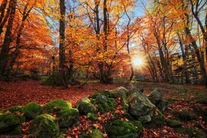 Ode to Autumn by MaximeCourty