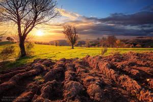 Farmland by MaximeCourty