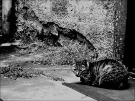 Cat by Justynka