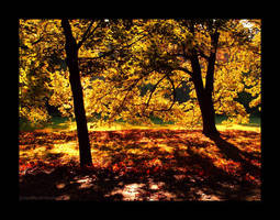 Golden Polish Autumn 2 by Justynka