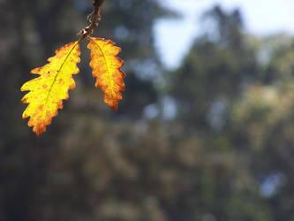 2 Leaves by mediarays