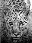 The Hunter by Pamela-Pengelley