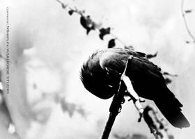 Dark Bird by WARHORSEstudio
