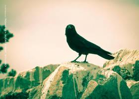 Dark Bird 2 by WARHORSEstudio