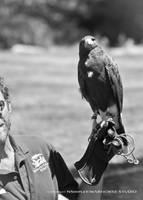 Hawk 1 by WARHORSEstudio