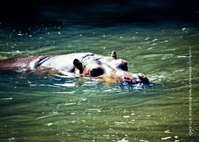 Hippo 1 by WARHORSEstudio