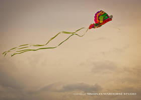 Kite 1 by WARHORSEstudio