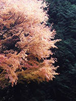Autumn by TheMustardSeed