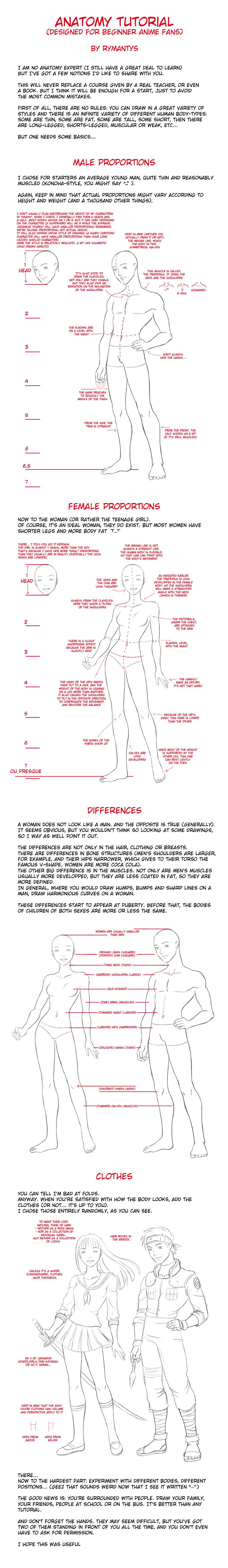 Anatomy Tutorial For Beginners By Rymantys On Deviantart
