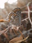 Butterfly by SpeECc