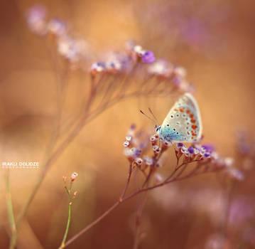 35photo by SpeECc
