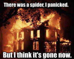 there was a spider by boeingboeing2