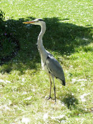 Hyde Park Heron by Warhammer-Fanatic