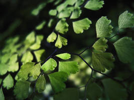 Magic leaves by MikeMS