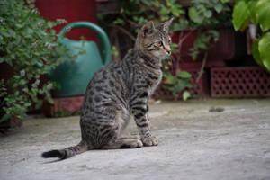 Cat 7 [Stock] by IvaxXx