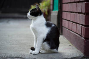 Cat 11 [Stock] by IvaxXx