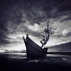 My Little Noah by arayo