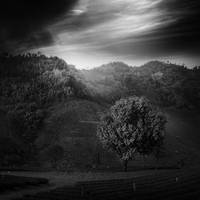 Light For Life by arayo