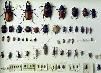 beetle sheet by chop-stock