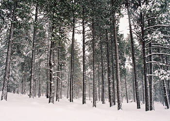 Natures Array by Freestyle35mm