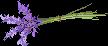 Lavender Pixel by viverrinae