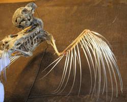 bird 82: zombie bird by cyborgsuzystock