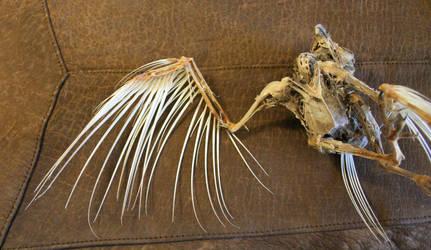 bird 83: zombie bird by cyborgsuzystock