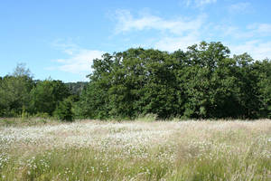 landscape 37: summer field by cyborgsuzystock