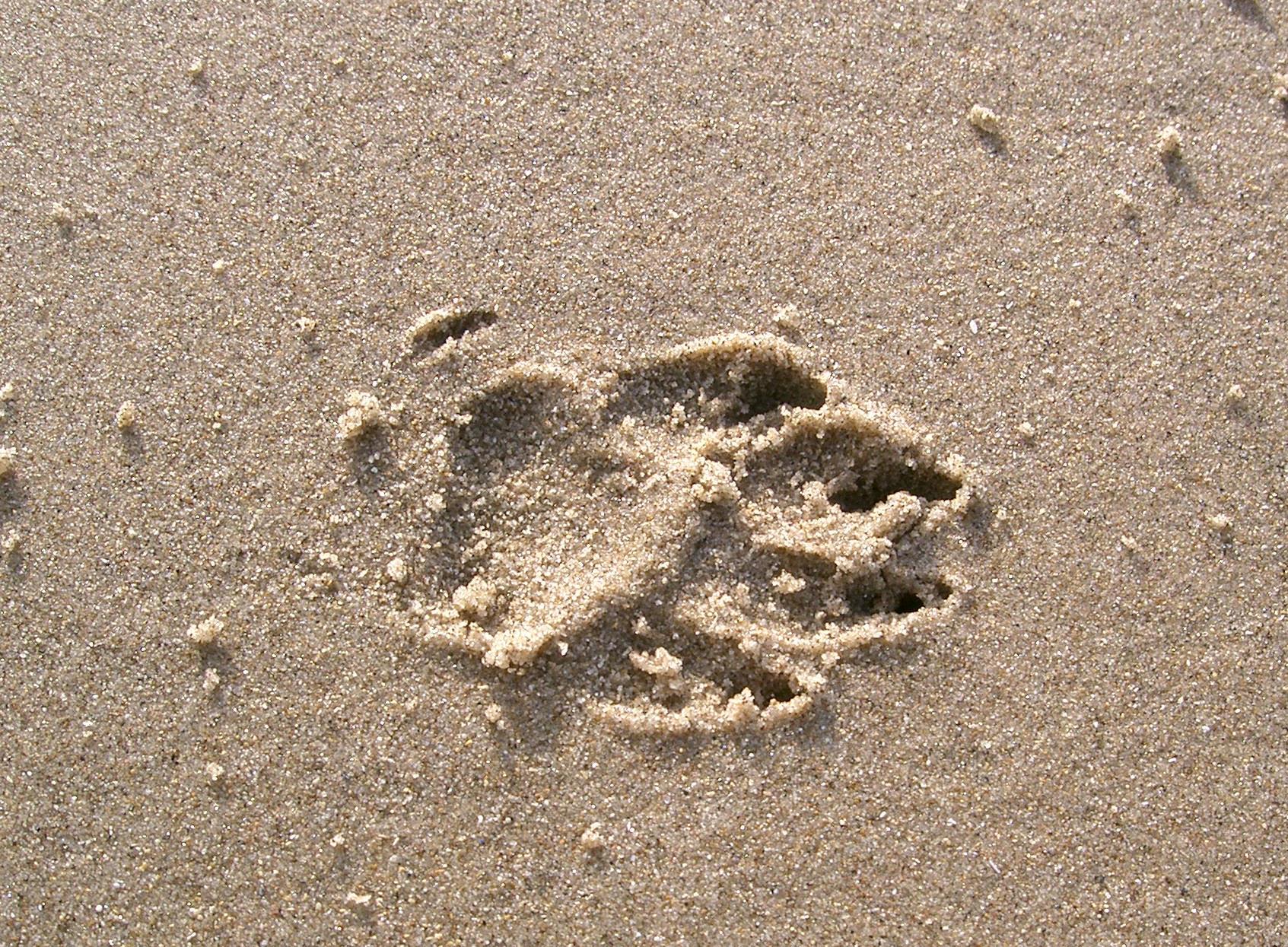 footprint 02: dog in sand by cyborgsuzystock