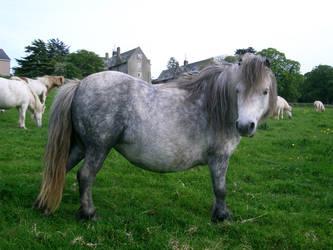 pony 16 by cyborgsuzystock