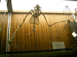 bat bones 02 by cyborgsuzystock