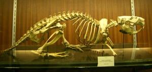 beaver skeleton by cyborgsuzystock