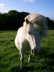 pony 26 by cyborgsuzystock