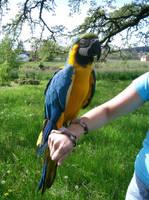 birdy 27: macaw by cyborgsuzystock