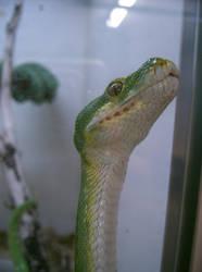 snake 18: green tree head by cyborgsuzystock