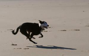 dog 24: sprint by cyborgsuzystock