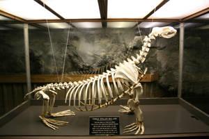sea lion 04: bones by cyborgsuzystock