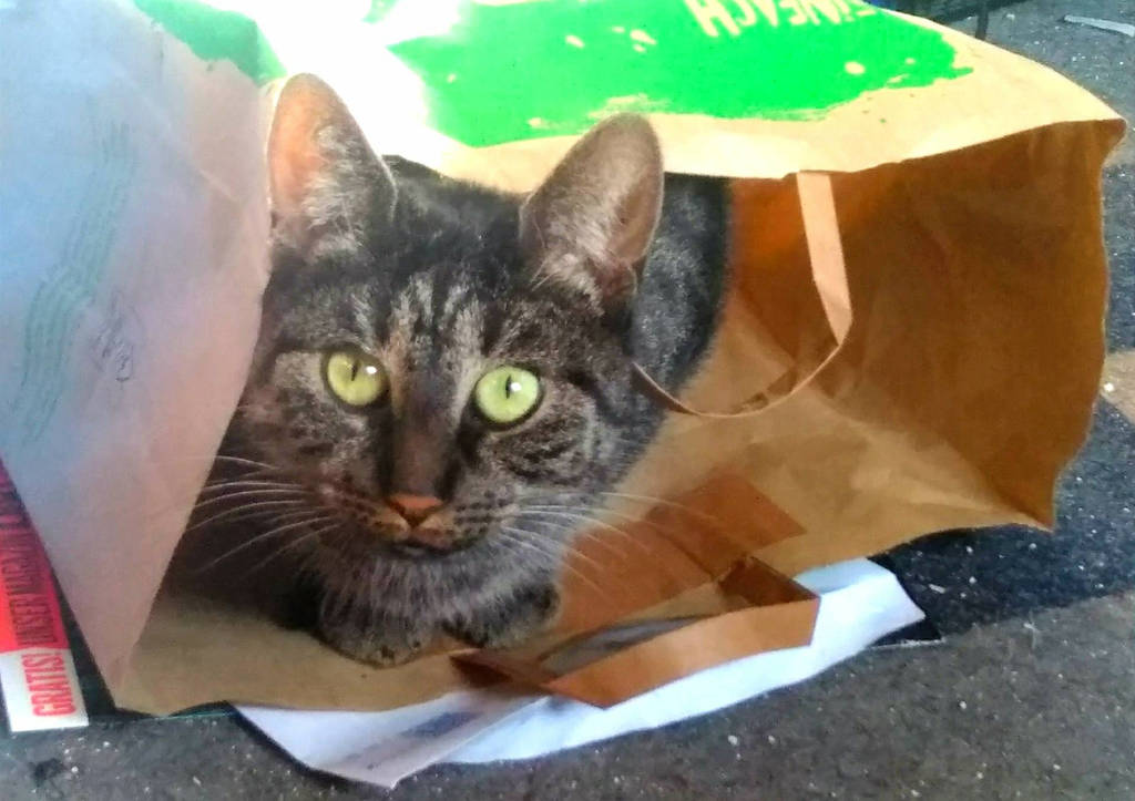 Cat in the Bag by Marmuc21