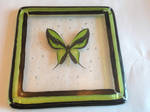 Coaster: Green Butterfly #1 out of 6 by Dimolicious