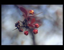 .: Feels like spring :. by Katosu
