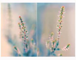 .: Pastel II :. by Katosu
