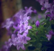 . : Bells : . by Katosu