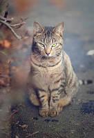 Meow by Katosu