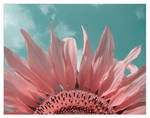 .:Pastel:. by Katosu