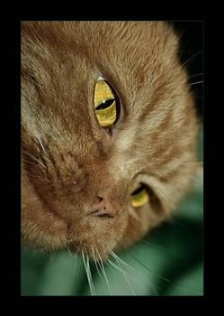 Kitty by Katosu