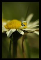 .:Daisy:. II by Katosu